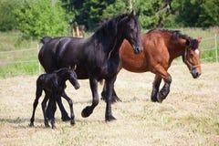 Horses on the paddock Royalty Free Stock Photos