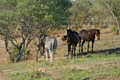 Horses in a paddock Royalty Free Stock Photos