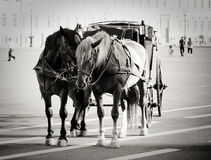 Horses on the Palace Square Stock Photography