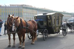 Horses on the palace square Saints Petersburg .Russia royalty free stock image