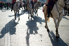 Horses parade in a city Stock Images