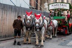 Horses before parade royalty free stock photo