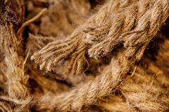 Horses parted hemp rope twine Stock Images