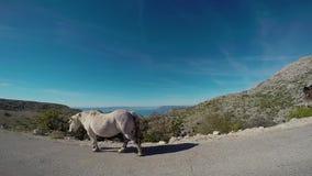 Horses passing camera. White horse passing camera. Amazing view landscape and horizon behind animal stock video