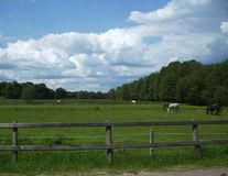 Horses on pasture. This picture I made out of my car Royalty Free Stock Images