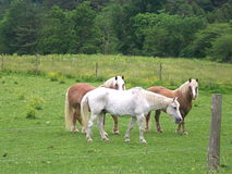 Horses in a pasture. Three horses in a pasture with sunshine and fresh spring grass Royalty Free Stock Images