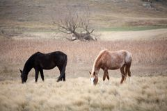 Horses in Pasture Stock Photo