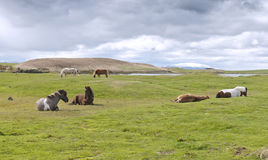 Horses on pasture Stock Photo