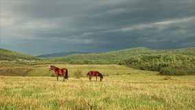 Horses in a pasture Royalty Free Stock Photography