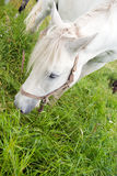 Horses on a pasture Royalty Free Stock Images
