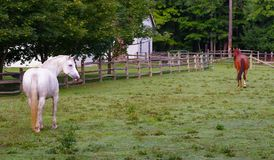 Horses in a Pasture. Two horses roam on a farm in rural northeast Ohio, USA royalty free stock photo