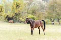 Horses on pasture Royalty Free Stock Photo