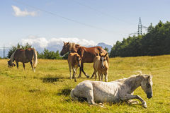 Horses at pasture on the Appennino Stock Photos