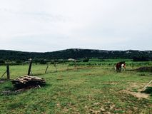 Horses on pasture. Beautiful landscape with two horses grazing on a pasture Stock Photography