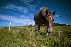 Horses on the Pasture Stock Photos