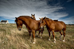 Horses on the Pasture Stock Photography