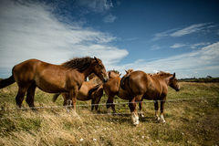 Horses on the Pasture Stock Images