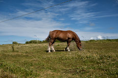 Horses on the Pasture Royalty Free Stock Photography