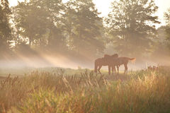 Horses on pasture in dense fog Royalty Free Stock Photography