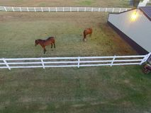 Horses in pasture. A drone pic of two horses standing in a pasture eating grass stock image