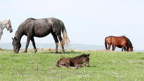 Horses on pasture stock video footage