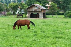 Horses at pasture Stock Photography