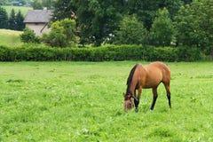 Horses at pasture Stock Image