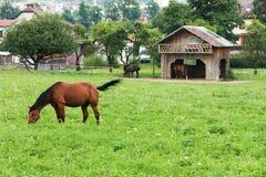 Horses at pasture Royalty Free Stock Photos