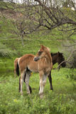 Horses in pasture Royalty Free Stock Image