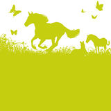 Horses on pasture Royalty Free Stock Images