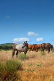 Horses in the pasture Stock Photo