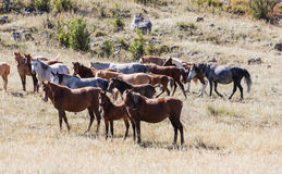Horses in the pasture Royalty Free Stock Photo