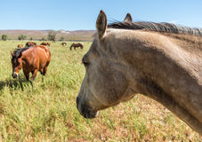 Horses in the pasture Stock Images