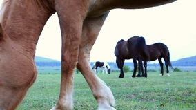 Horses in the pasture stock video footage