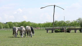 Horses on pasture landscape stock video footage