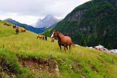 Horses pasture in the mountains Stock Photos