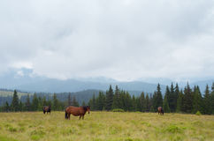 Horses on pasture in the mountains Stock Photo