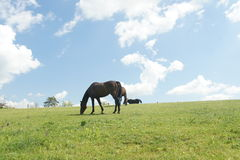 Horses on pasture near Lednice Stock Photo