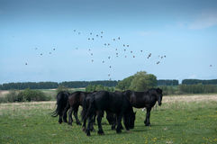 Horses. In the pasture, in the pasture Stock Image