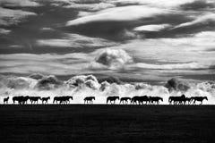 Horses. On pasture on Son-Kul lake, Kyrgyzstan Stock Photography