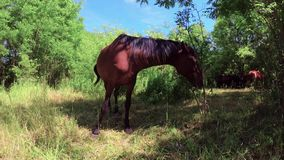Horses in the pasture. At spring stock video