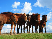 Horses on the pasture. Summer landscape with horses on the pasture Stock Photo