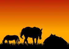 Horses on pasture at sunset near stable Royalty Free Stock Image