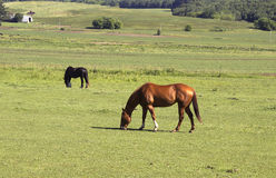 Horses in a pasture Stock Photo