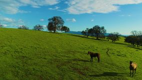 Horses pasturing on a country side aerial view green grass live stock mountains and lakes day time sun. Set country side green grass live stock mountains and stock video footage