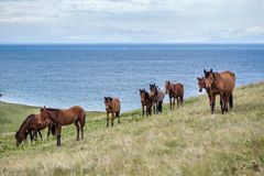Horses pasturing at the lake Stock Images