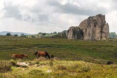 Horses pasturing in the plateau of Argimusco, in Sicily, with a natural megalith in the background Royalty Free Stock Image