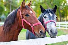 Horses in pen stock images
