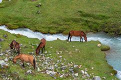 Horses in Peruvian Andes. South America stock photography