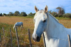 Horses pet equestrian sport Royalty Free Stock Images